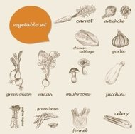 vegetables set of vector sketches