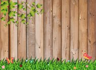 Fresh spring green grass with leaf plant over wood fence