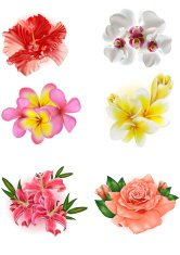 set of beautiful flowers: lily, rose, hibiscus, orchid, plumeria