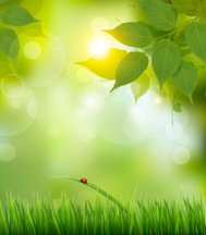 Nature background with green spring leaves . Vector illustration