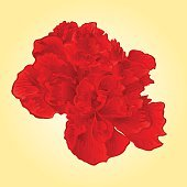 Red hibiscus tropical flowers vector