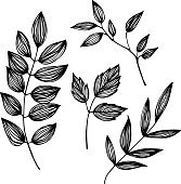 Hand-drawn vector illustration - set of leaves. Ink and feather