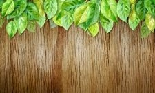 Spring leaves on wood horizontal background. Watercolor illustra