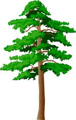 vector pine tree on a white background