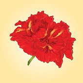 Flower red hibiscus  vector
