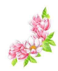 Watercolor pink magnolia branch