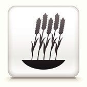 Royalty free vector icon button with Grain