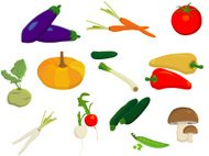 Collection of different vegetables on a white background
