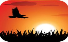 eagle silhouette with sunset background