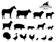 Animaux de ferme de Vector Silhouettes isolées on White