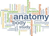 anatomy wordcloud concept illustration
