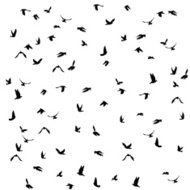 pigeons set for peace concept and wedding design. Flying dove