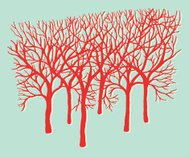 Group of Bare Trees