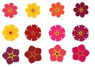 Color Flowers Collection 5