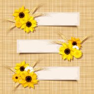 Vector banners with sunflowers and ears of wheat. Eps-8.