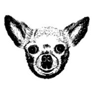 Hand Drawn Vector Portrait of Chihuahua or  chiwawa dog