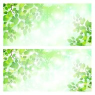 Leaf background sky