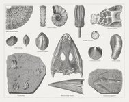 Triassic fossils, published in 1877