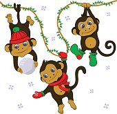 Funny monkeys in winter set