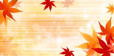 Autumn leaves maple background