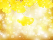Ginkgo autumn leaves background