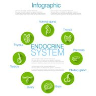 Endocrine System Infographic Design