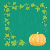 Hand drawn pumpkin and vine