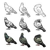 Set of pigeons on three pose and styles