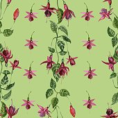 Fuchsia flowers seamless pattern. Floral background.