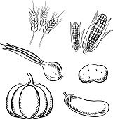 Ripe autumn vegetables and wheat sketch icons