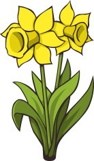 Image result for daffodils clipart free