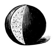 Vintage Clip Art and Illustrations | Round Cheese