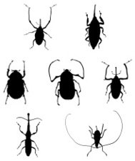 Silhouettes of Bugs