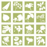Herbal Plants Silhouette Set A - C