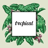 Background with banana leaves. Decorative image of tropical foliage, flowers