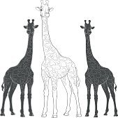 Set of vector illustrations with giraffes. Isolated objects