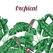 Seamless border with banana leaves. Decorative image of tropical foliage