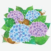 Hydrangea rainy season flower icon