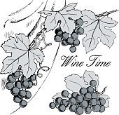 Grape branches with bunches of grapes and leaves.