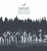 Pine forest hand drawn vector illustration