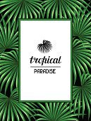 Paradise card with palms leaves. Decorative image tropical leaf of