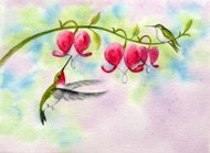 Hummingbirds and Bleeding Hearts