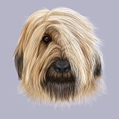 Illustrated Portrait of Briard dog.