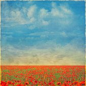 Beautiful landscape with poppies  against the sky with clouds