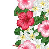 Seamless border with tropical flowers hibiscus and plumeria. Background made