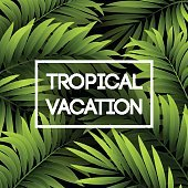 Summer tropical background of palm leaves