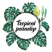 Background with monstera leaves. Decorative image of tropical foliage and