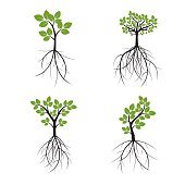 Set Color Trees and Roots. Vector Illustration.