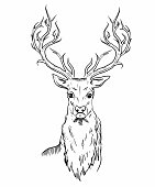 Sketch of deer head