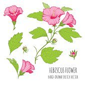 Сolorful tropical floral ornaments for design greeting cards. Hibiscus.